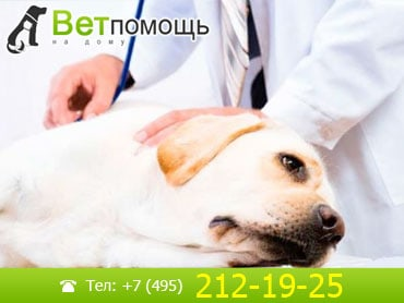 Ветеринар-кардиолог в Москве