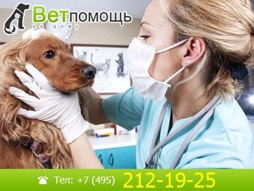 Ветеринар-невропатолог в Москве