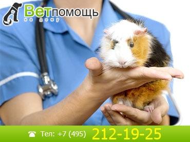 Ветеринар-Ратолог в Москве