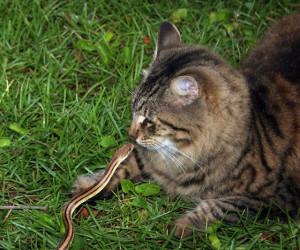 Укусы змей, как причина,из-за которойопухает морда у кошек (котов)