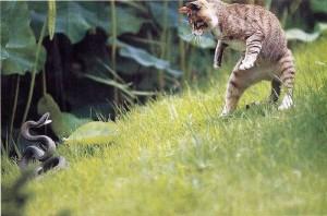 Что делать, если из-за укуса змеи у кошки или кота опухла морда