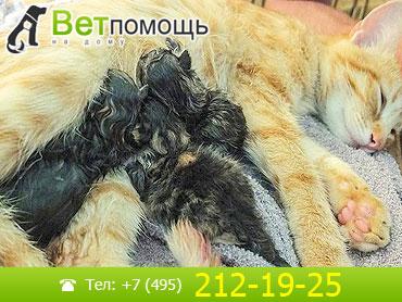 Роды кошек