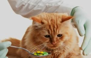 Лечение гриппау кошек и котов