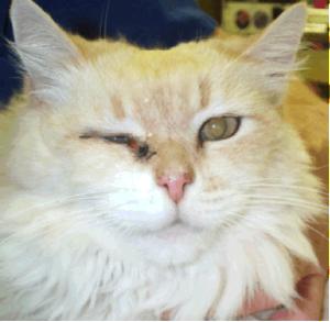 Симптомы гриппау кошек и котов