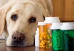 Лечение аллергии у собак