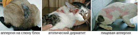 Лечение аллергии у кошек и котов