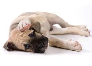 Признаки теплового удара у собак