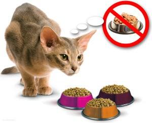 Почему кошка не ест и что делать?