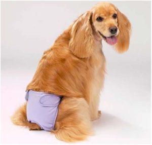 Причины и методы лечение недержания мочи у собак