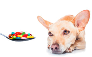 Лечение недержания мочи у собак