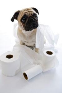 Причины диареи/поноса у собак