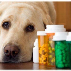 Лечение острой диареи/поноса у собак в домашних условиях