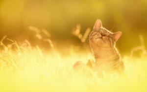 Опасности лета для Вашей кошки