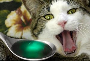 Опасности отравления у кошек
