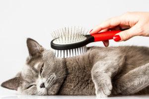 Профилактика солнечного ожога, гипертермии и теплового удара у кошек