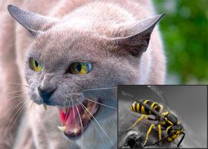 Укусы насекомых и змей у кошек