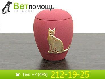 Кремация и ритуальные услуги для кошек и котов