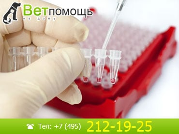 Клинический анализ крови на дому медицинская справка для охранников спб
