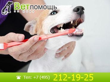 Чистка зубов животным на дому