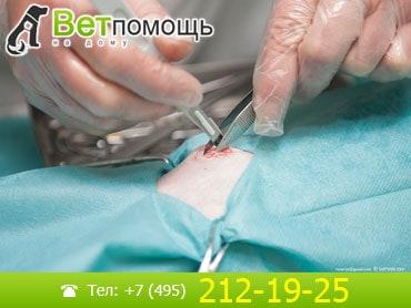 Кастрация и стерилизация животных на дому