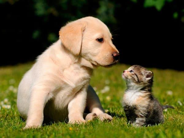 Аллергия у детей на животных
