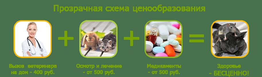 Ветеринар На Дом Круглосуточно