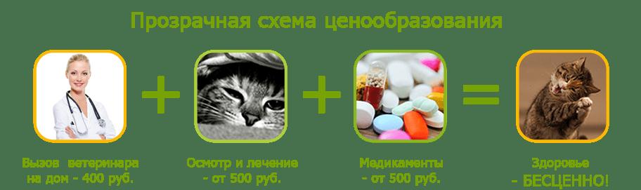 Лечение кошек и котов на дому