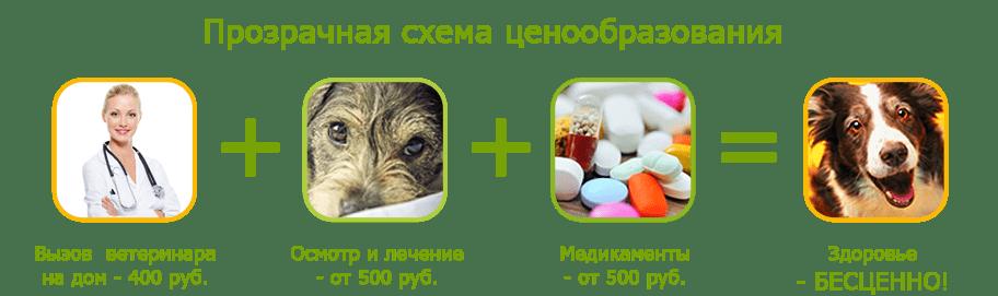 Лечение собак на дому