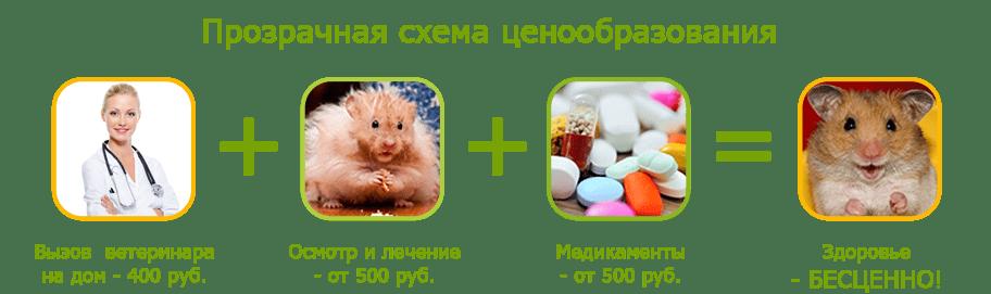 Лечение грызунов на дому