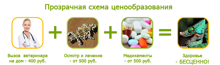 Лечение рептилий на дому